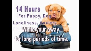 Download 14 Hours For Puppies and Dogs Who Suffer Anxiety, Loneliness Video