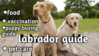 Download Labrador retriever dog guide in hindi || puppy buying guide || vaccination || food || care Video