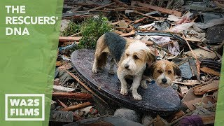 Download A Hope For Paws Boy & Dog Reunion After Oklahoma Tornado Rescue Video