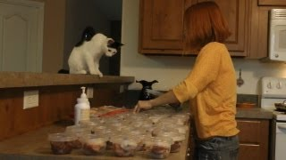 Download How to Prepare a Raw Diet for Cats Video
