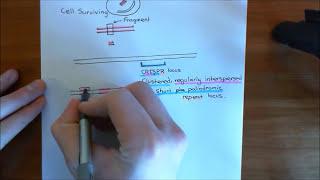 Download The CRISPR-Cas9 System Part 1 Video