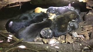 Download Mom with broken foot rescued with THIRTEEN PUPPIES - Stray Rescue of St. Louis Video