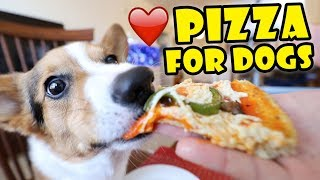 Download CORGI Trying Homemade Pizza (Dog-Friendly Gourmet)    Life After College: Ep. 595 Video