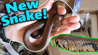 Download Unboxing our new Black-Tailed Cribo!! Video