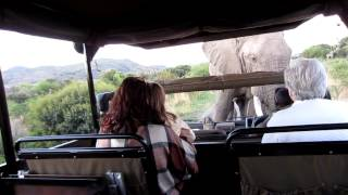 Download Angry Elephant in Pilanesberg Video