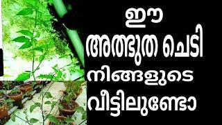Download bnefict of manathakkaali manithakkaali malayalam Video