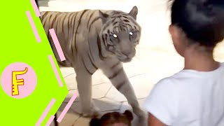 Download Funny Kids and Animals at the Zoo - Funny Kids Fails Vines Video