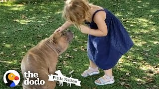 Download Sick Shelter Pit Bull Captures 2-Year-Old Girl's Heart | The Dodo Pittie Nation Video