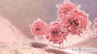 Download ArtScience Talks @ Le Lab – Seeing Is Believing: Therapeutic Cancer Vaccines Video