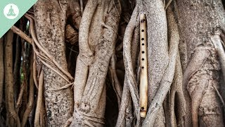 Download Bamboo Flute Music, Asian Music, Meditation, Relaxing Video