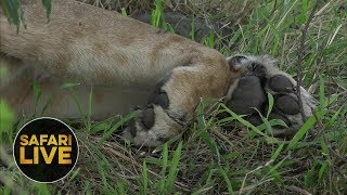 Download safariLIVE - Sunset Safari - October 20, 2018 Video