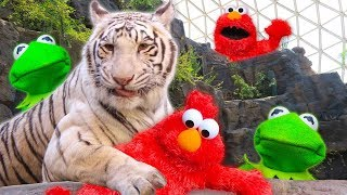 Download Kermit the Frog and Elmo play Hide and Seek at the Zoo! Video