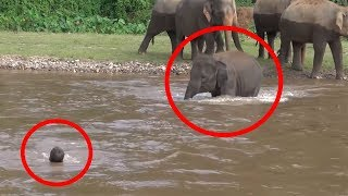 Download 7 Times ANIMALS SAVING HUMANS Caught On Camera | FUN2KNOW! Video