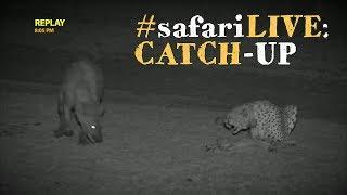Download Last week on safariLIVE: Cheetah vs hyena food fight! Video