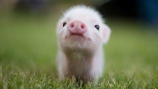 Download Top 15 Cutest Baby Animals Video
