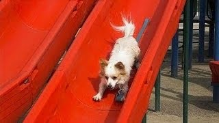Download Puppies on Slides Compilation (2013) Video