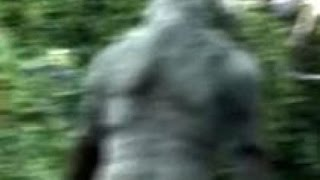 Download MASSIVE Bigfoot Caught Trying to Elude Camera 2016 (Sasquatch Proof/Evidence) Video