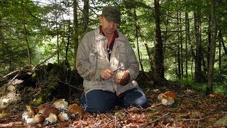 Download Білі гриби в Карпатах Video
