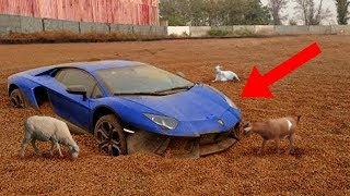 Download CRAZIEST Abandoned Vehicles Discovered! Video