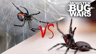 Download Spider vs Spider Showdowns #1-5 | MONSTER BUG WARS Video