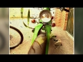 Download HONDA c90 modificada colombia Video