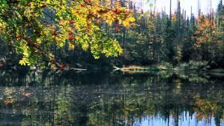 Download Nationalpark Bayerischer Wald - Waldwildnis grenzenlos Video