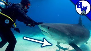 Download Hitching a Ride on a SHARK!? Video