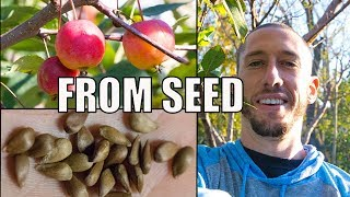 Download How To Grow An Apple Tree From SEED to FRUIT 🍎! In 3 YEARS!! Video