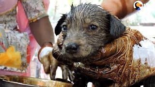 Download These People Dedicated Their Lives To Saving Animals   The Dodo Video