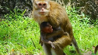 Download Great! Finally Amari meet her baby Lori again | Happy to see Amari run to hug baby|Monkey Daily 765 Video