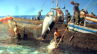 Download Can You Believe This Fishing? - BIG STINGRAYS Video