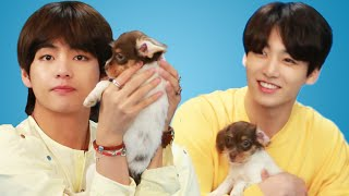 Download BTS Plays With Puppies While Answering Fan Questions Video