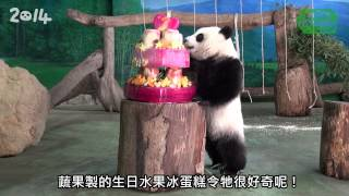 Download 「圓仔」兩歲生日趴 –「野保市集」初登場 Yuan Zai's 2 Years Old Party Video
