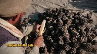 Download Improving livelihoods through restoration of Chalghoza Pine in Pakistan Video