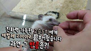 Download 친화력200% 고슴도치 애벌레200마리 부어주니 반응이?! 거의 개슴도치 Video
