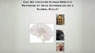 Download Human Gene Regulation, Signaling Networks and Gene Changes Video