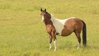 Download What should I feed my pregnant mare? Video