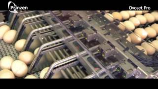 Download Vencomatic Group: Prinzen - Ovoset Pro - Automatic egg packer for hatching eggs Video