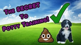 Download The Secret to Potty Training Your AussieDoodle Video