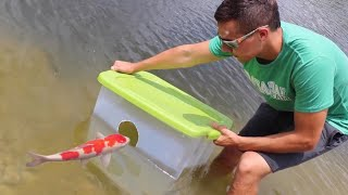 Download Fish Trap Catches Colorful Pond GIANTS FOOD!! Video