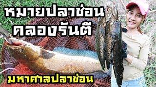 Download มหาศาลปลาช่อน คลองรันตี fishingEZ Video