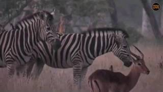 Download Pt 1 Safari Live's Sunrise Safari Drive at 6:00 AM on April 25, 2018 Video