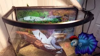 Download Turtle Tank Update Before The Turtles Come In. Video