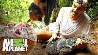 Download Los encuentros con dragones más emocionantes | Wild Frank: En busca del dragón | Animal Planet Video