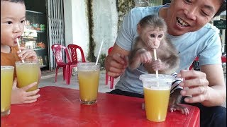 Download Baby Monkey | Doo And His Family Drink Sugar Cane Juice Video