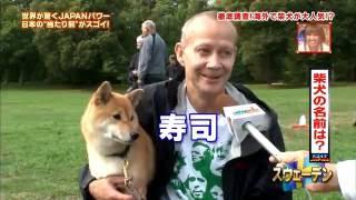 Download 海外での柴犬人気 Video