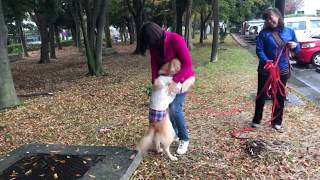 Download 里親犬 元の飼主さんと再会 Video