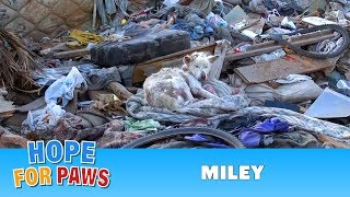 Download Hope For Paws: A homeless dog living in a trash pile gets rescued, and then does something amazing! Video