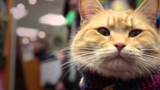 Download A STREET CAT NAMED BOB: Coming to America! Video