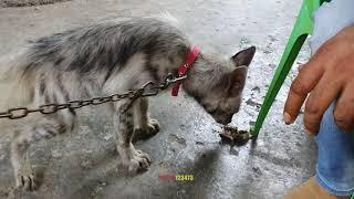 Download بعد عشرين يوم من علاج جرو ضبع هاجمته كلاب بيتبول لاحد الصيادين مع جمال العمواسي Video